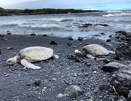Black Sand Beach - Punaluʻu Beach