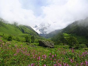 Valley of Flowers National Parks