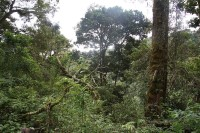 La Amistad National Park