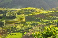 Rice Terraces of Sa Pa
