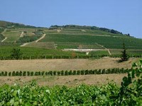 Tokaj Wine Region