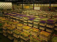 Aalsmeer Flower Auction