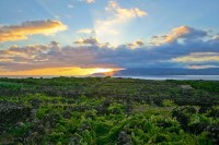 Landscape of the Pico Island Vineyard Culture